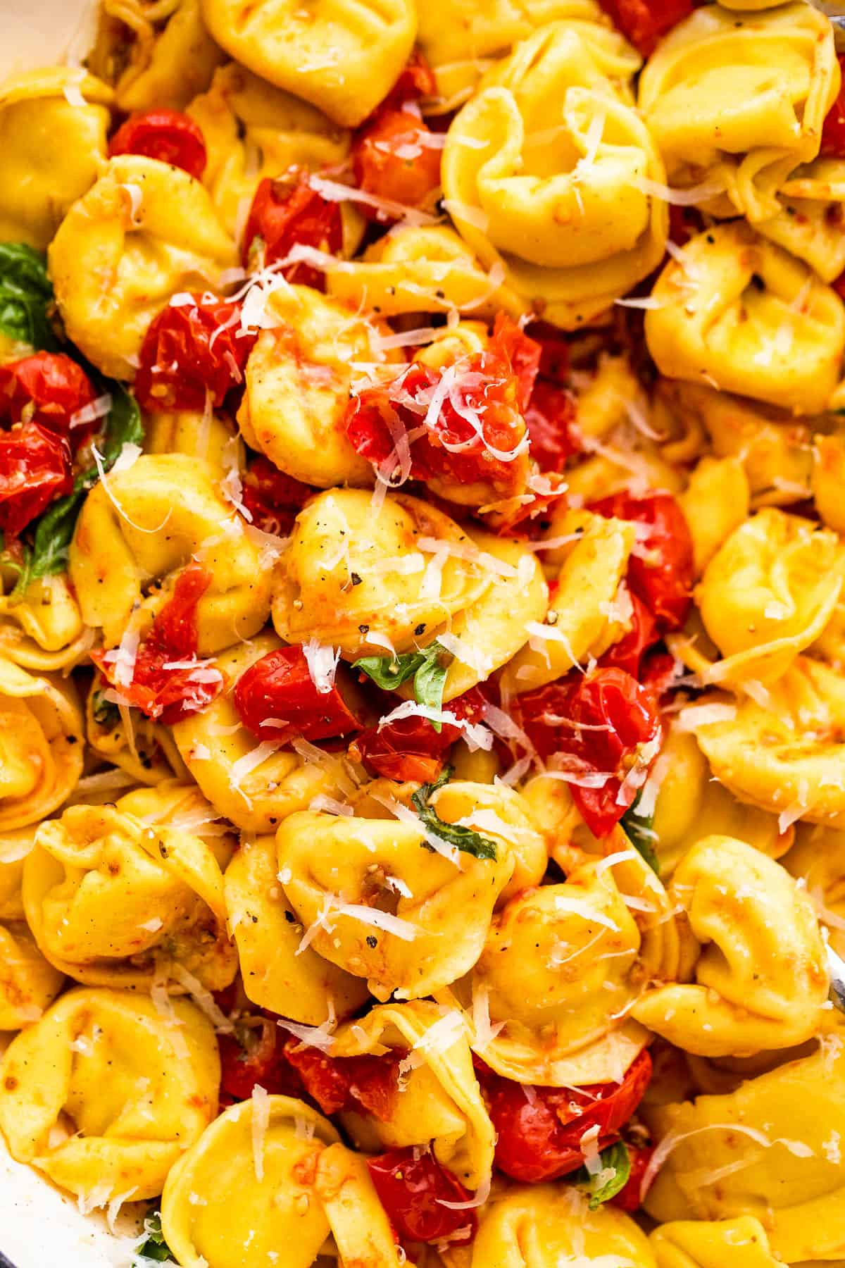 cheese tortellini with roasted cherry tomatoes and fresh parmesan cheese